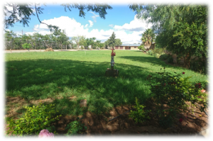 Picture of Garden at School Entrance initiated by 2017 Trailblazers